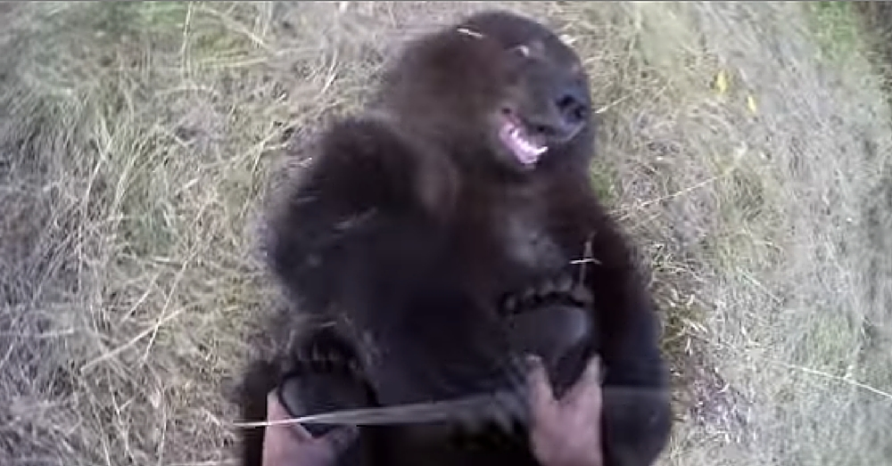 Adorable Video Shows Grizzly Cub Getting Her Feet Tickled…And Loving It