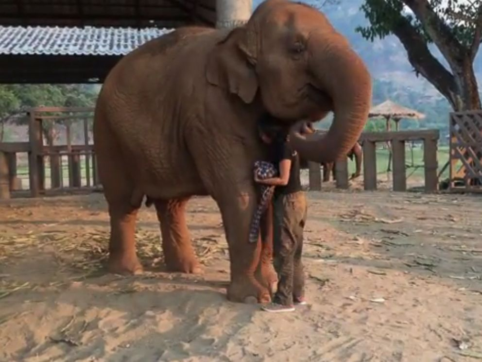 Faamai, an elephant at the Save Elephant Foundation in Thailand, falls asleep when her caretaker, Lek, sings a lullaby.