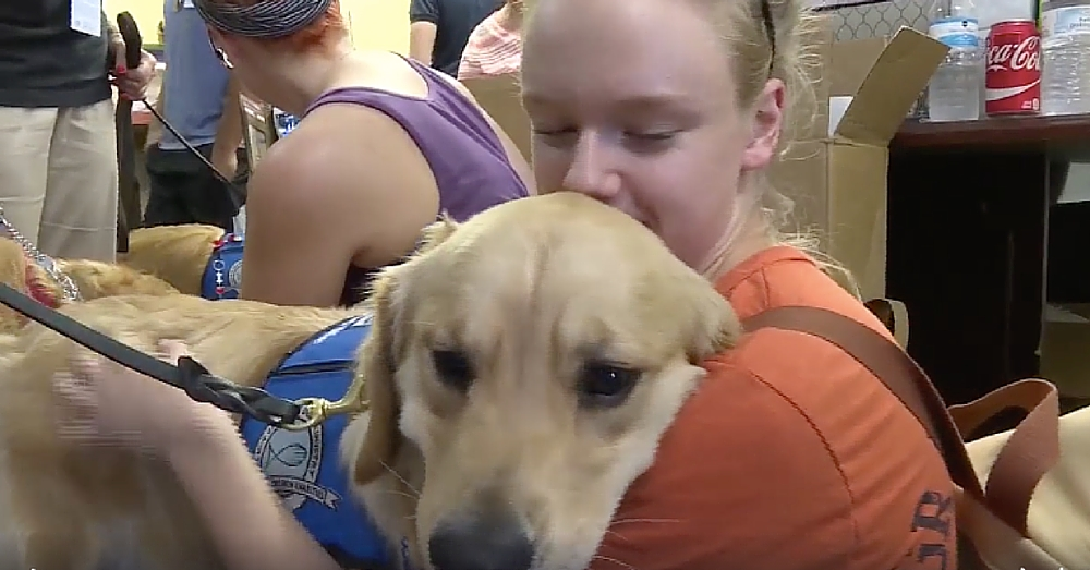 Comfort Dogs Lend Their Support In Wake Of Orlando Shooting
