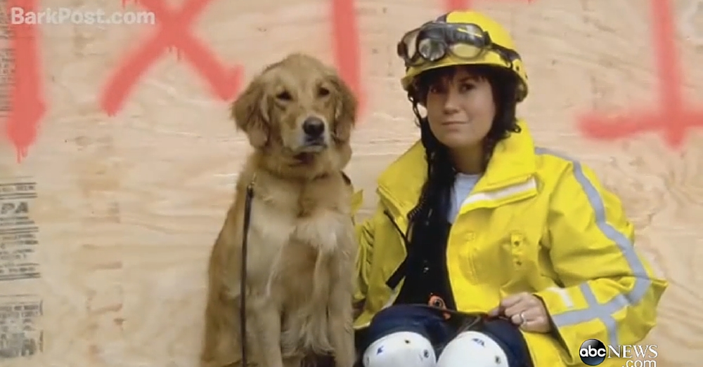 Last Living 9/11 Rescue Dog Given Special Honor Before Passing