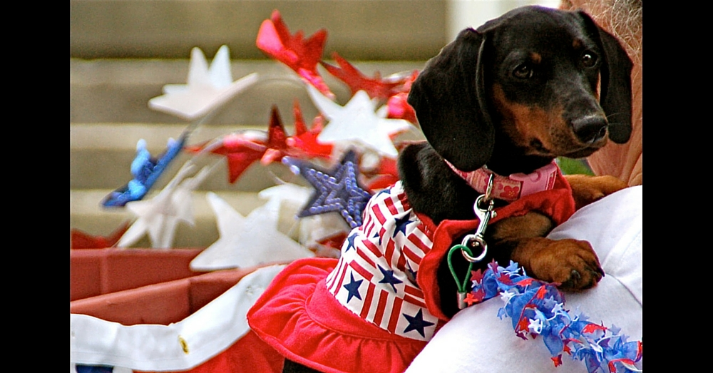 Here's How To Keep Your Pets Safe This 4th Of July