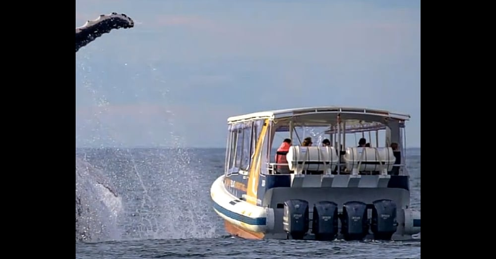 Photog Follows Boat Tour, Spots Something Massive In Water. When It Surfaces…Holy Moly!