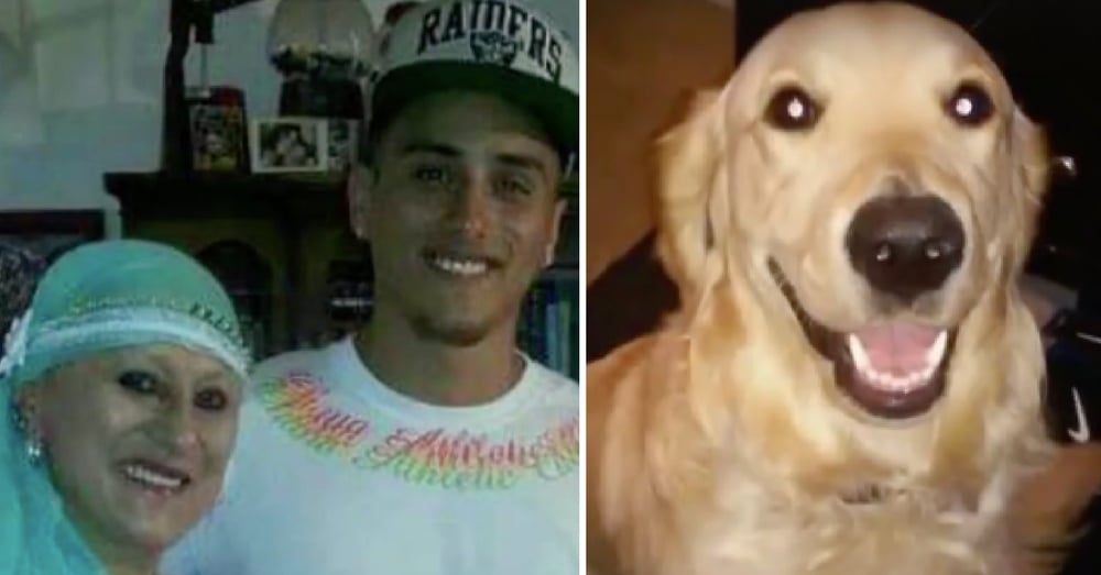 Mom Dies, Car Crashes And Dog Runs Away On Same Day. 6 Days Later He Gets A Phone Call