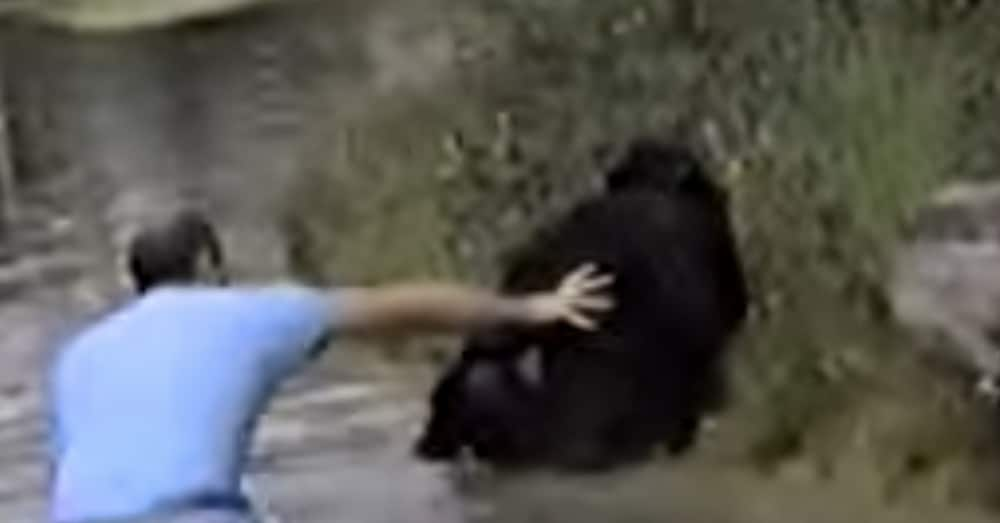 Husband Goes Missing At Zoo. Then She Spots Him In Ape Exhibit, And That's When She Sees It…