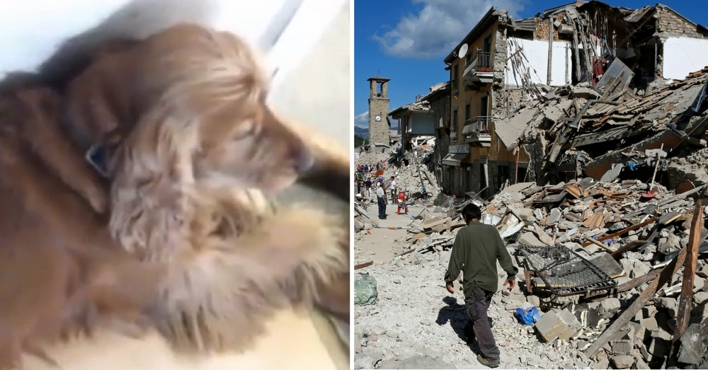 Heartbreaking: Dog Refuses To Leave Owner's Side After He's Killed In Earthquake
