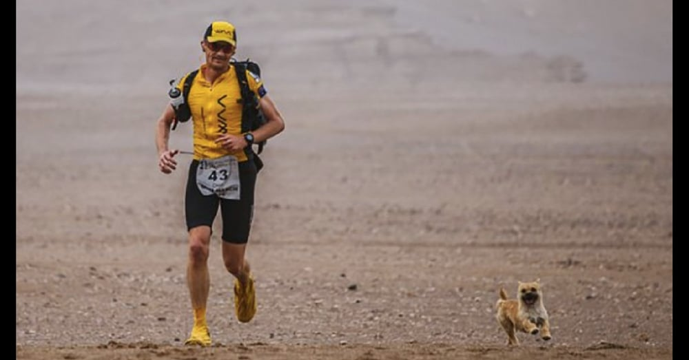 Stray Dog Follows Marathon Runner 77 Miles. What He Does Next Is Going Viral