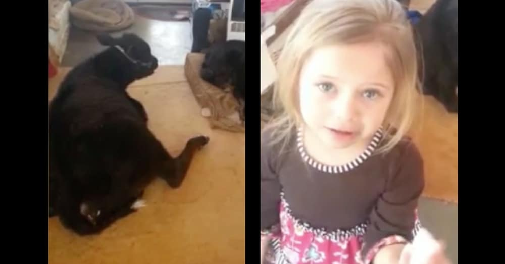 Mom Walks In To Find Cow In House. Her 5-Year-Old's Explanation? Hilarious!