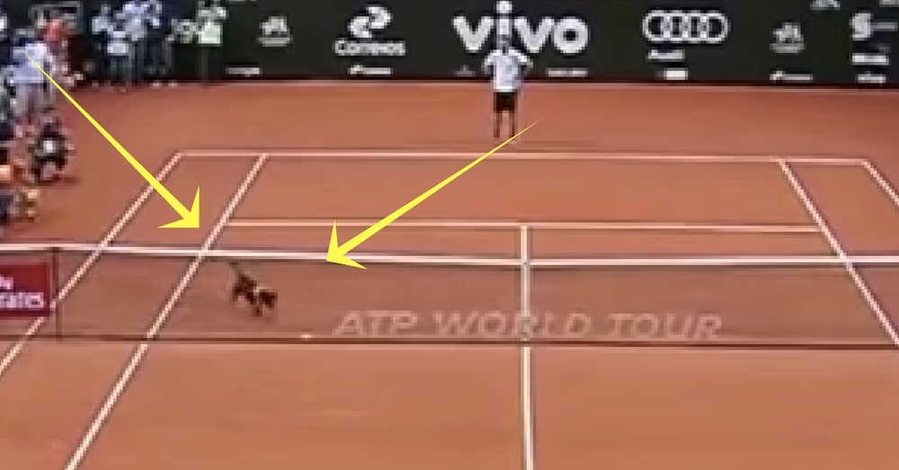 Stray Dog Darts Across Tennis Court In Middle Of Match. What Happens Next Is Going Viral