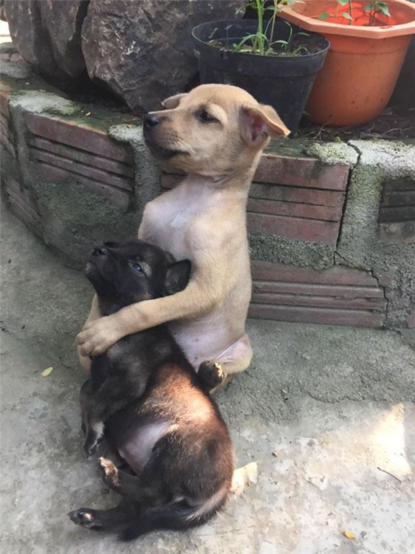 huggingpuppies2