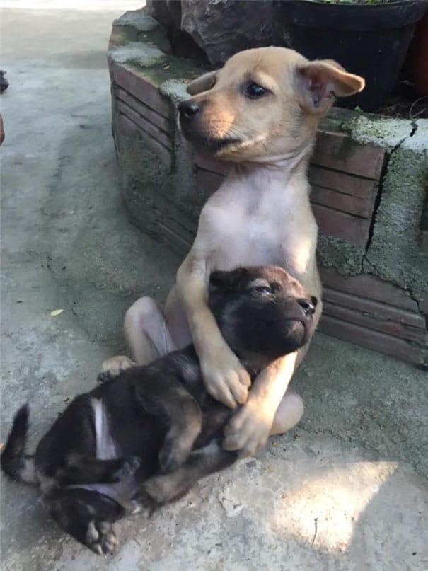 huggingpuppies3