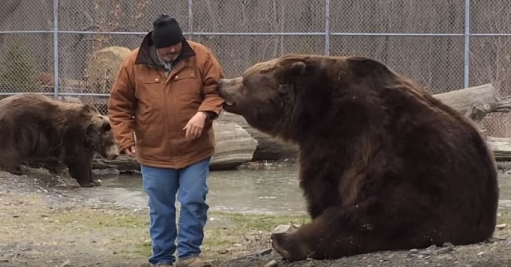 Man Tries To Leave Pen When Bear Suddenly Grabs Arm. What Happens Next…Holy Moly!