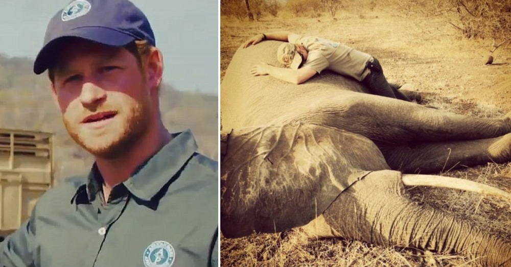 Prince Harry Helps Rescue 500 Elephants From Poachers In Heart Of Africa