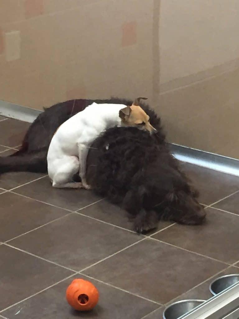 Source: Animal Rescue League of Iowa