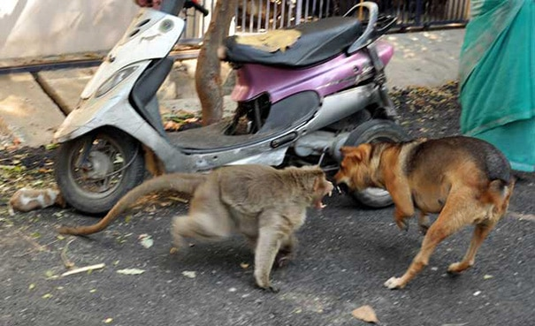 And protected the little puppy from stray dogs.