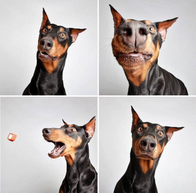 shelter-dogs-photo-booth_0-1
