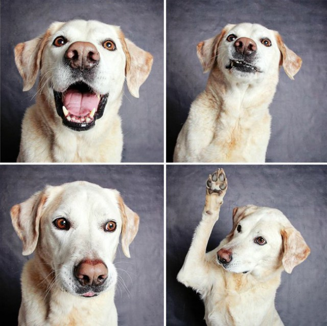 shelter-dogs-photo-booth_4