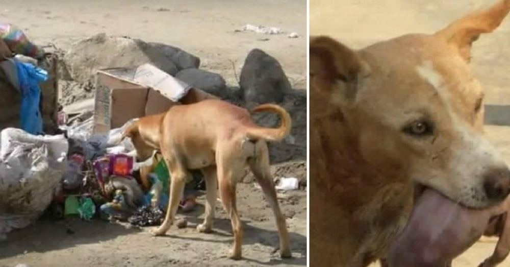 Stray Dog Finds Baby Buried In Trash Heap. What He Does Next Is Absolutely Amazing