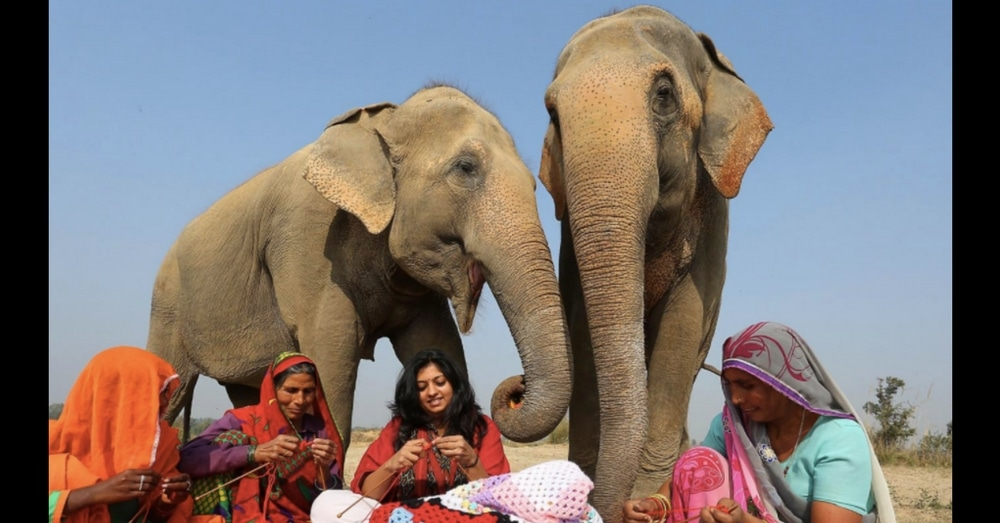 Facing Freezing Temps, These Women Keep Rescue Elephants Warm In Most Adorable Way