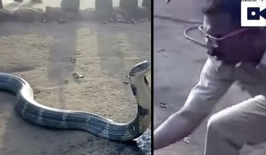 Man Finds Cobra Dying Of Thirst. What He Does Next Is The Last Thing You'd Expect
