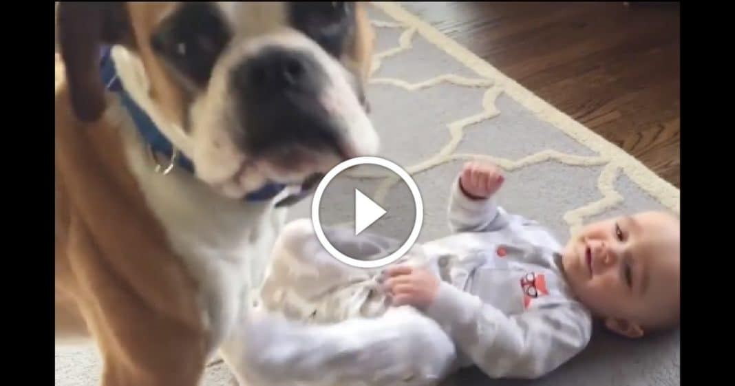Mom Starts Tickling Baby, But What This Dog Does Next Will Melt Your Heart