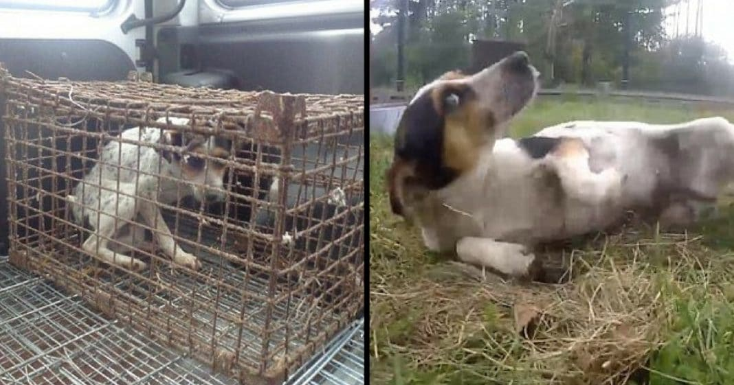 Dog Locked In Cage Entire Life. Now Watch What Happens When She's Finally Able To Run