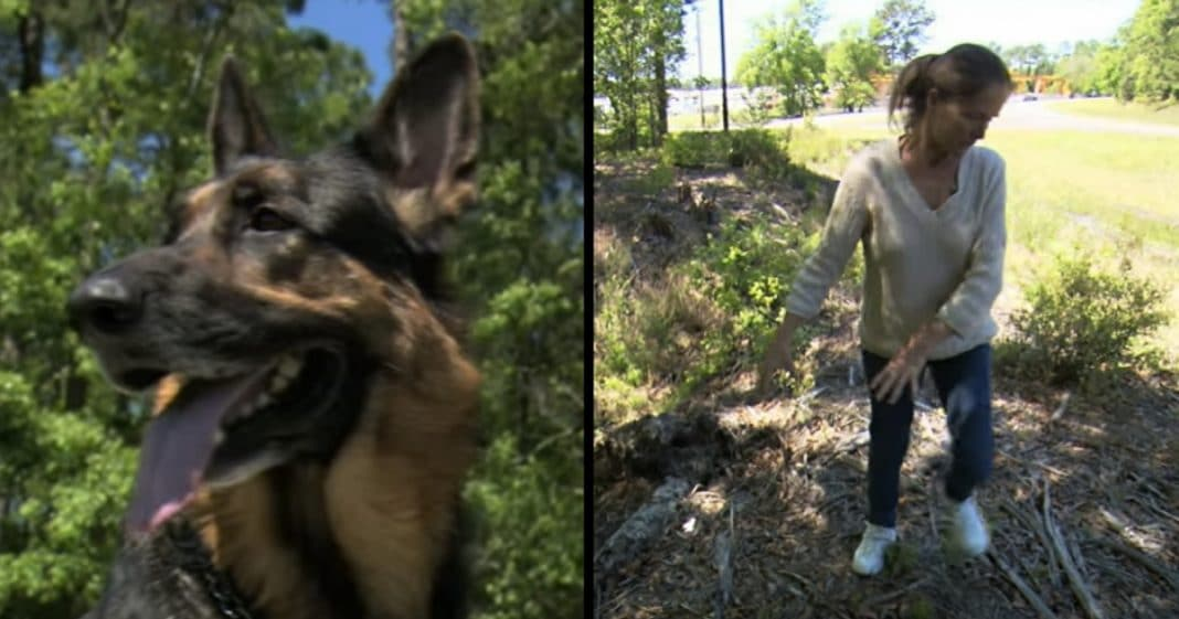 Shelter Dog Lunges Over Fence And Down Side Bank. Seconds Later They See Why
