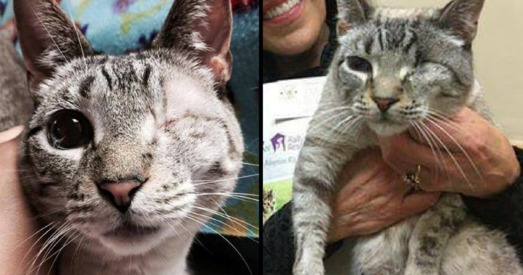 One-Eyed Cat Called 'Too Ugly' For Love…Until He Finds His Soulmate
