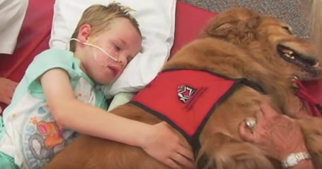 Boy Dying After Horrific Car Crash, But When They Put Him Next To Dog A Miracle Happens…