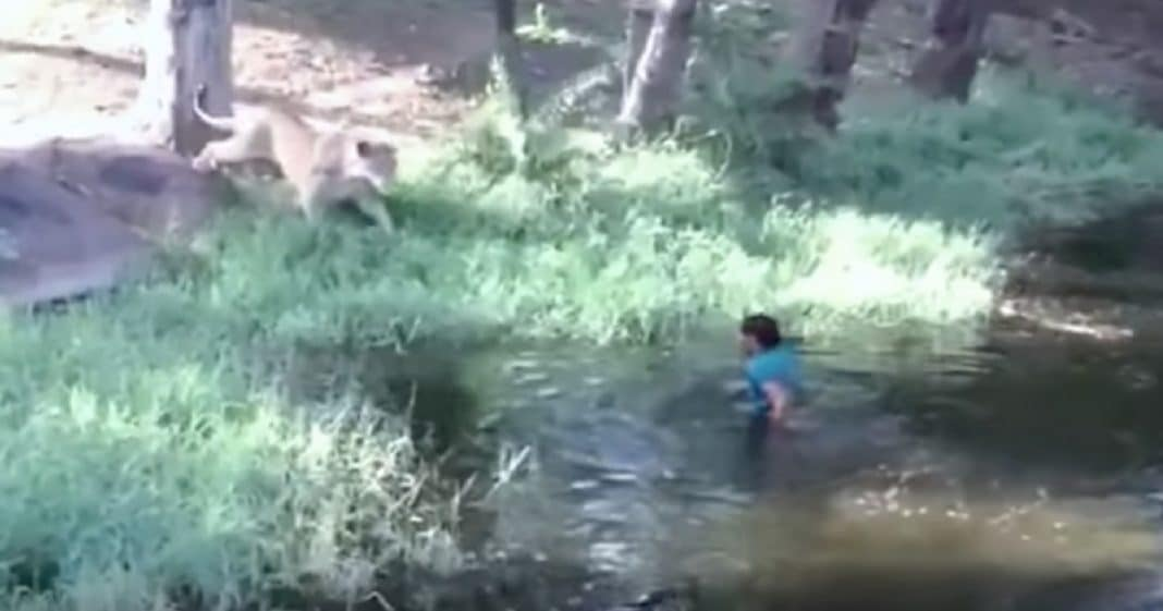 Crowd Terrified When Man Jumps In Lion Cage, But Then He Reaches For Lion's Paw