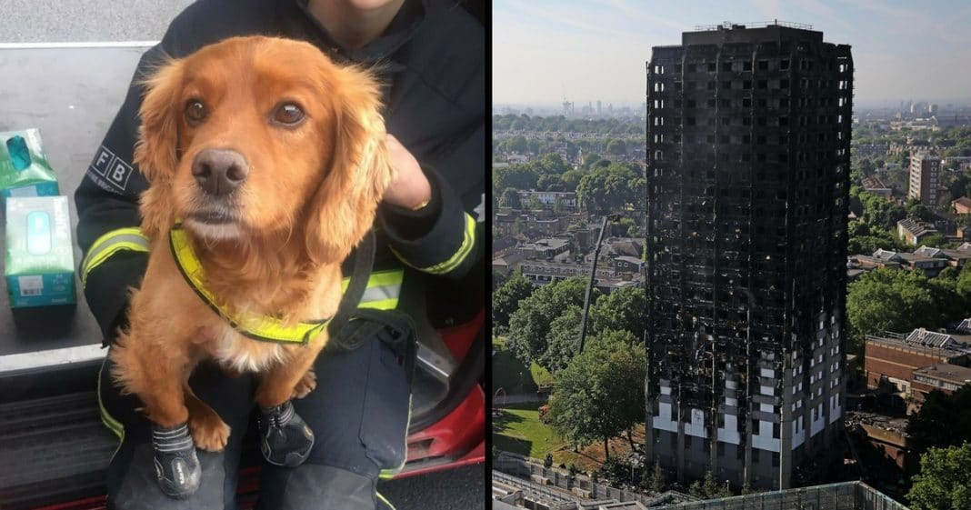 Meet The Incredible Dogs Helping At The Scene Of The Grenfell Tower Fire