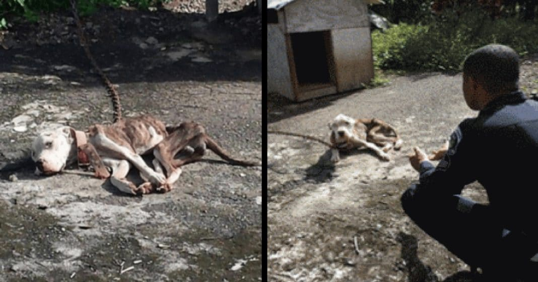 Abused dog just days from death, then fed-up neighbor takes matters into his own hands
