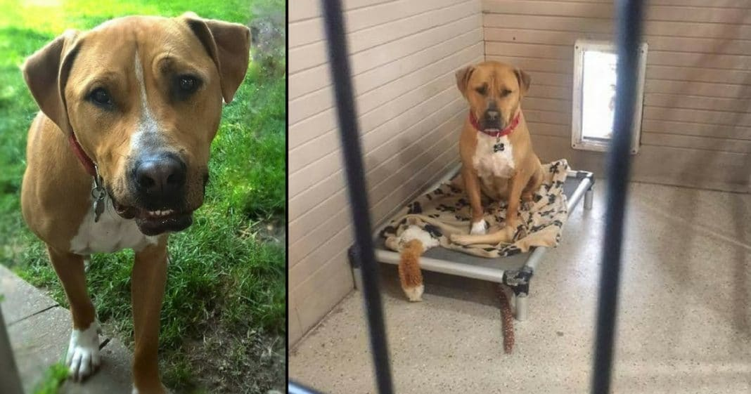 No One Wants To Adopt Dog Waiting 2.5 Yrs. Now They're Determined To Find His Forever Home