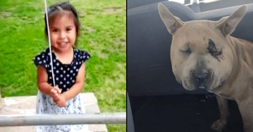 Dog Starts Shoving 3-Yr-Old, Then Dad Realizes He Just Saved Her Life