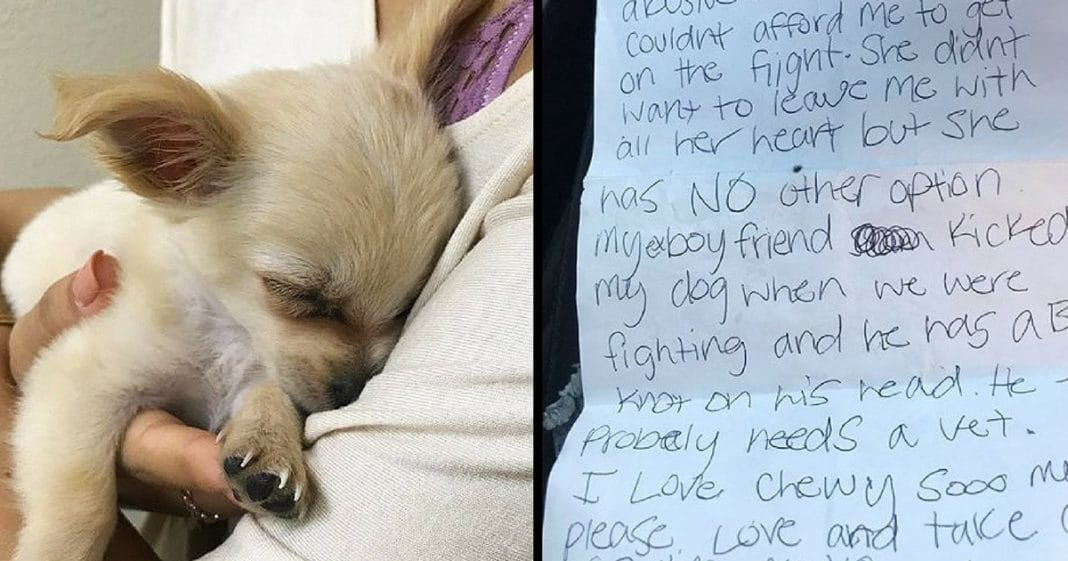 She's Horrified When She Finds Dog Abandoned In Bathroom, Then Finds Note That Breaks Her Heart