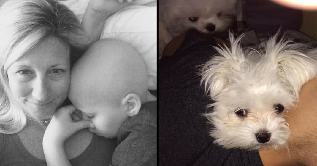 Mom Buys 2 Puppies Days Before Son's Cancer Diagnosis. When She Walks In Room Her Heart Melts