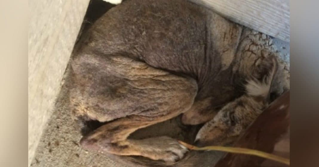 Woman Rescues Homeless 'Dog' Cowering On Porch, Then Truth Immediately Becomes Clear