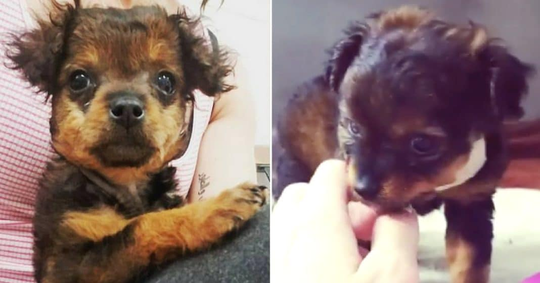 Owner Abandons 'Paralyzed' Pup, Tells Vet To Put Her Down. 10 Minutes Later Vet Sees Her Moving