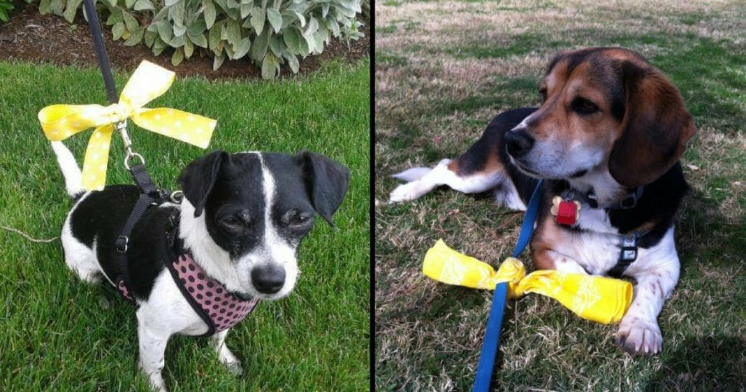 Here's What To Do If You See A Yellow Ribbon Tied Around A Dog's Leash