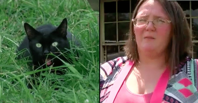 Sleeping Mom Annoyed When Cat Scratches Her, Then Realizes She Just Saved Their Lives