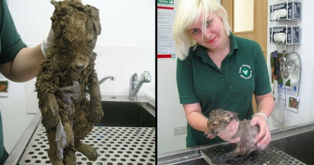 Good Samaritans Rescue Muddy 'Puppy,' Then Bath Reveals He's Something Else Entirely