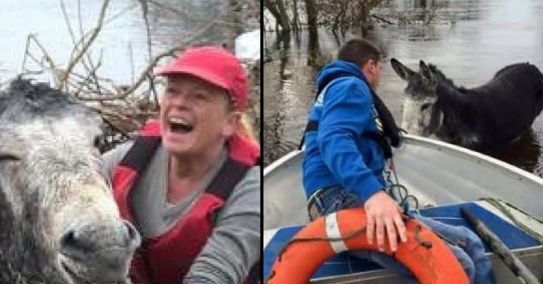 Rescuers Save Drowning Donkey, But Way He Thanks Them Has Them In Stitches