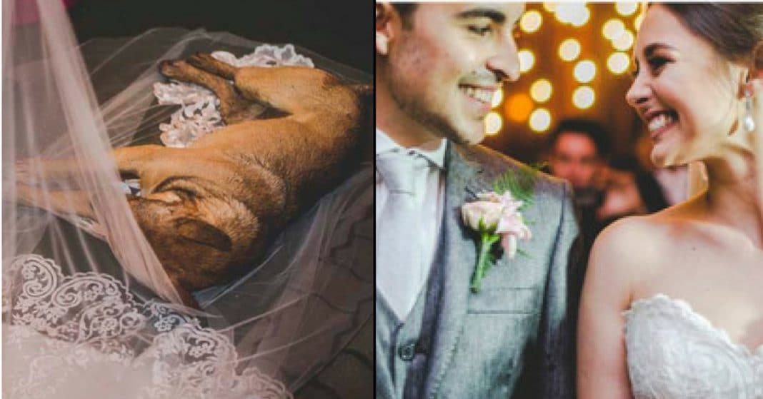 Dirty Stray Crashes Wedding, Falls Asleep On Bride's Veil. Her Reaction Had Me In Tears