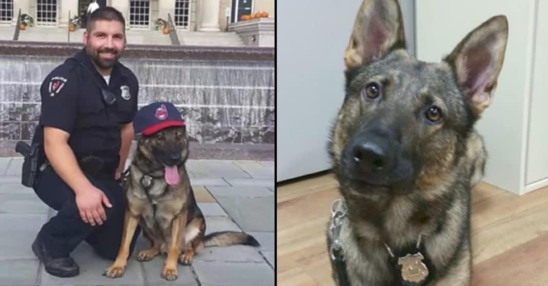 Officer Told To Give Up Sick K9 Partner Or Pay. He Knows There's Only 1 Choice He Can Make