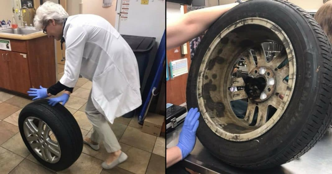She's Confused When Family Drags Tire Into Vet, Then Hears Tiny Cries Coming From Inside