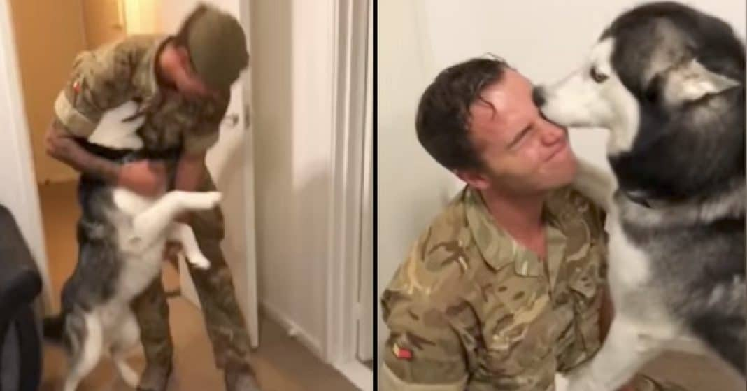 Husky Thought He'd Never See Soldier Dad Again. Now Watch His Reaction As They're Reunited