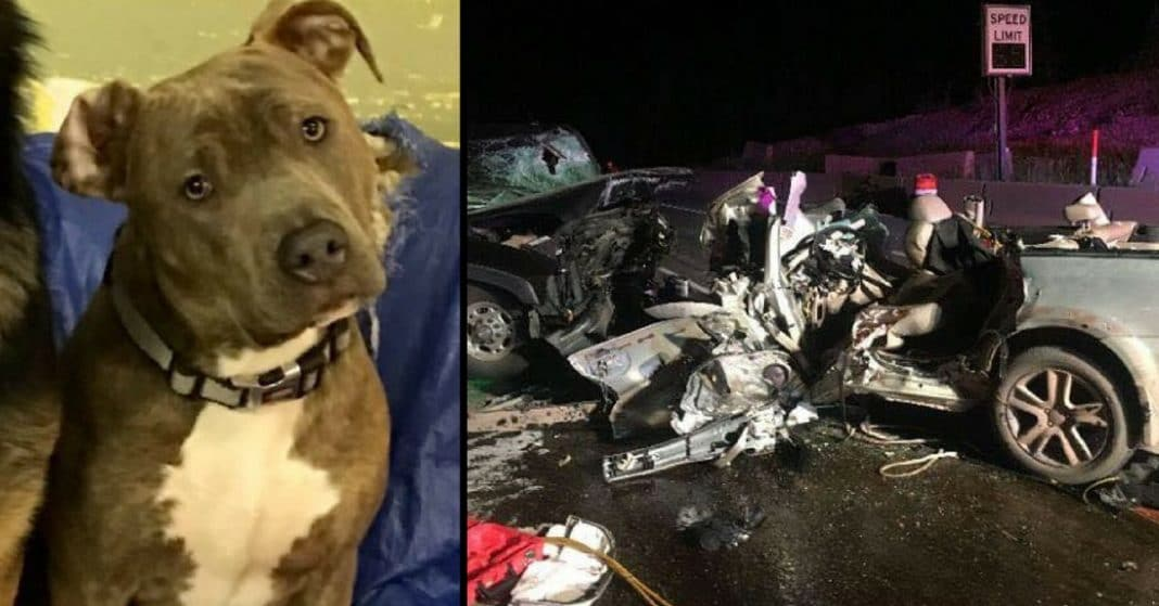 Terrified Dog Bolts After Car Accident, Then Heartbroken Friend Prays For A Miracle