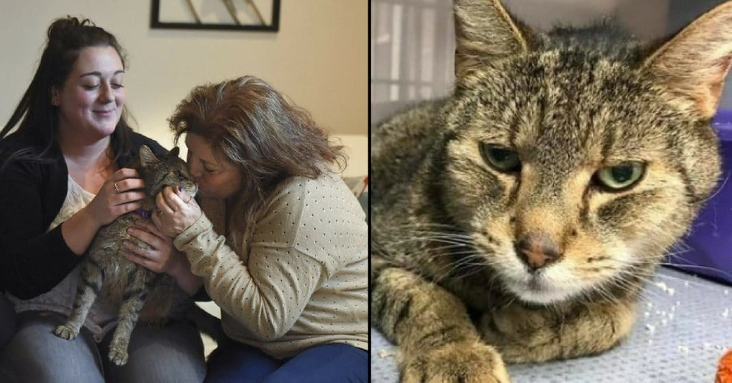 Mom Sobs After Cat Goes Missing. 2 Yrs Later Logs On Facebook, Sees Familiar Face Staring Back