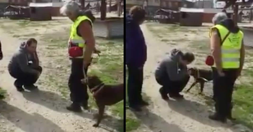 Dog Lost 2 Yrs Thinks She'll Never See Owner Again. Her Reaction When He Finds Her Says It All