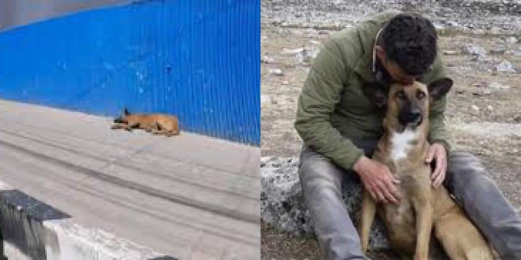 TV Star Spots Stray In Peru While Filming New Show, What He Does Next Changes Dog's Life Forever