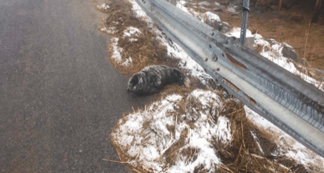 Man Sees Something Strange On Side Of Road On Way To Work, Looks Closer And Realizes It's Alive